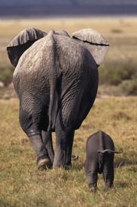 elephantsafari.JPG