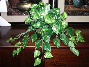 plants10.jpg