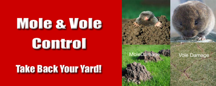 How To Get Rid Of Moles In My Backyard Backyard Design