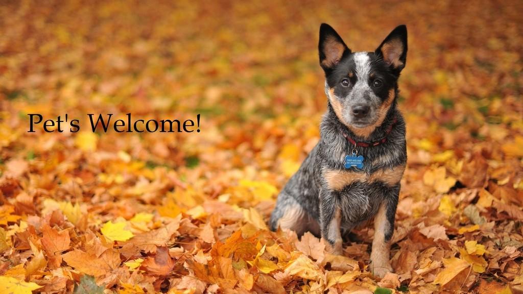 Dog_in_Autumn_Leaves.jpg