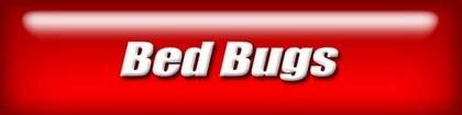 web-nav-bed-bugs.jpg