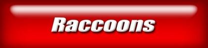 webnav-raccoons.jpg