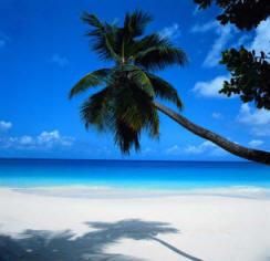 caladesi_island_palmtree.jpg