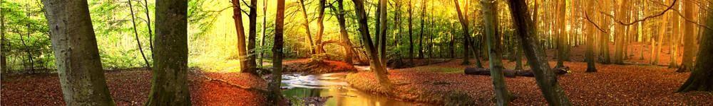 ForestSunlightB.jpg