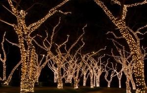 treeswithlights.jpg