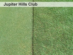 22-the-greens-encroachment-barrier-jupiter-hills-club.jpg